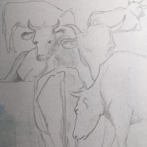 Kühe bleistiftskizze